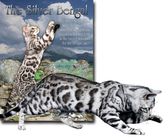 The Silver Bengal