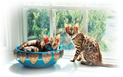 Window Kittens